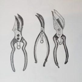 Semeli Wine Label Drawing