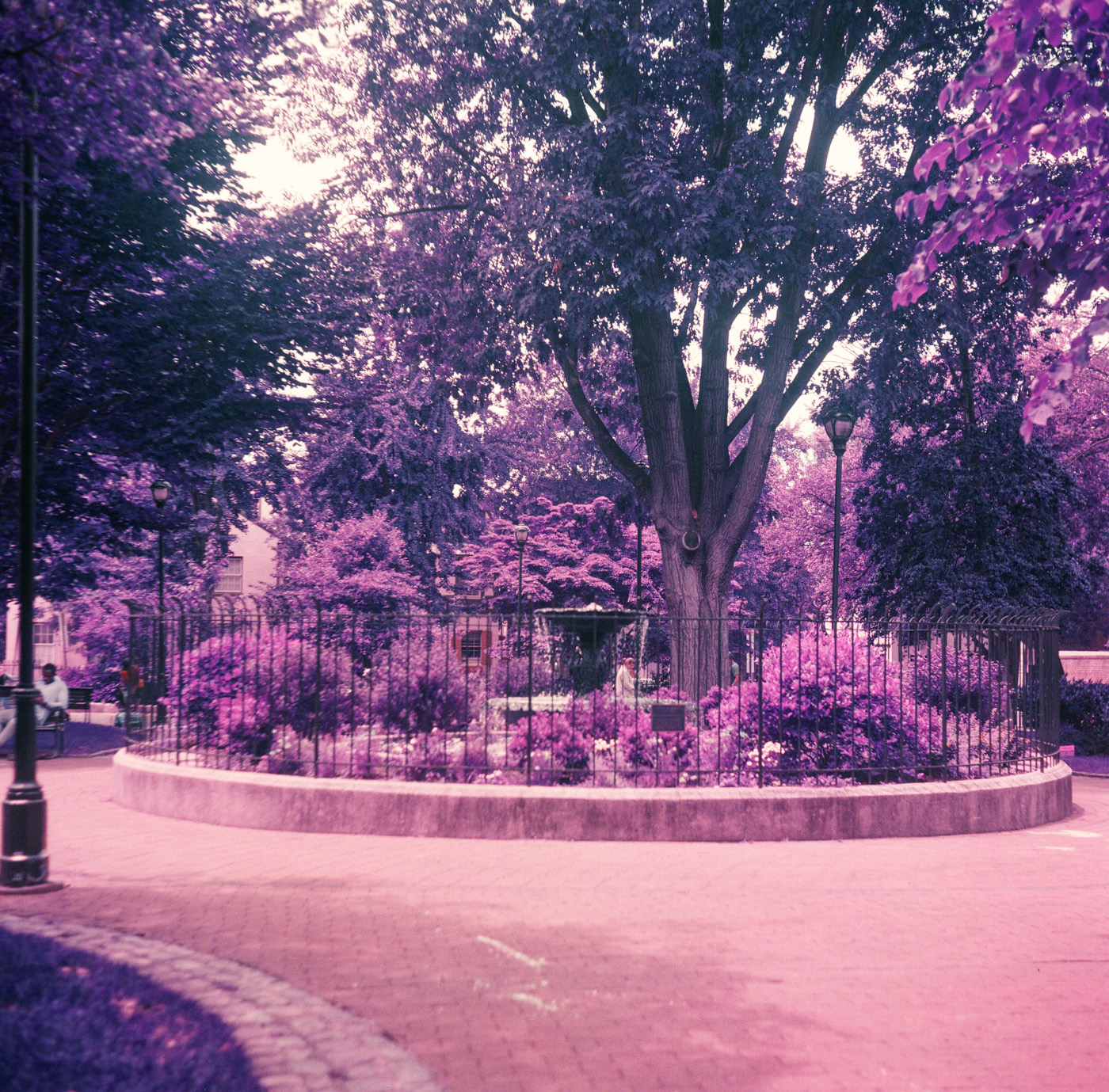 Fitler Square