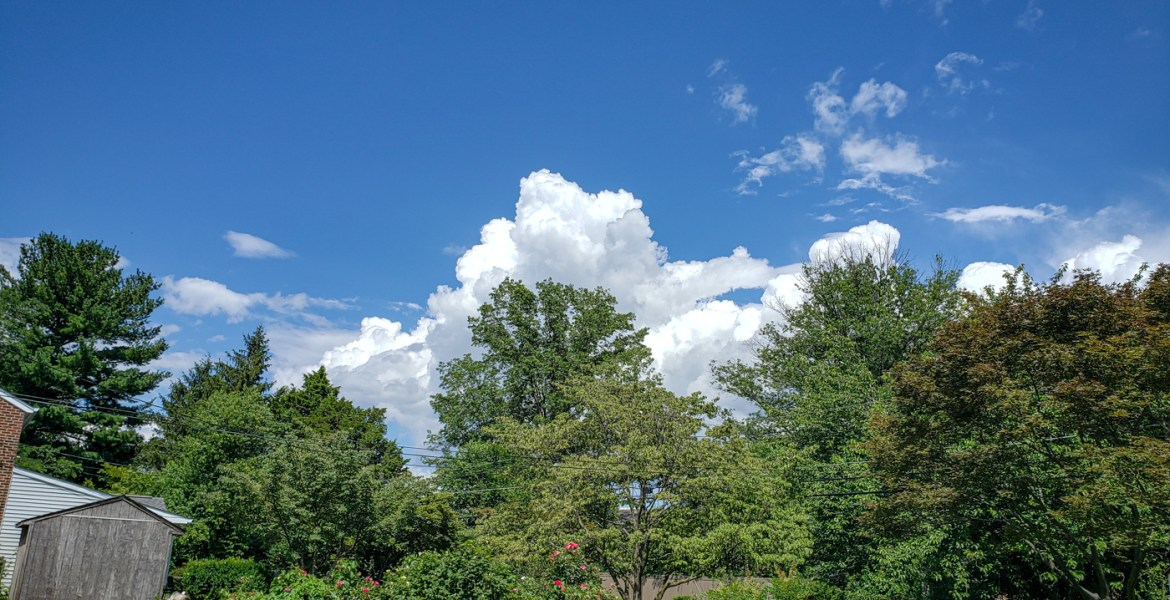 Trees, Sky, Clouds