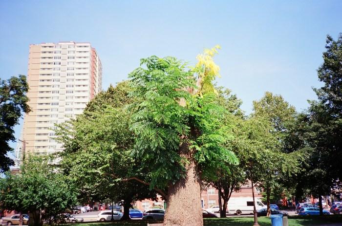 Truncated Tree