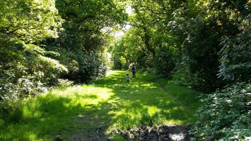 sunshine_woodland_walk