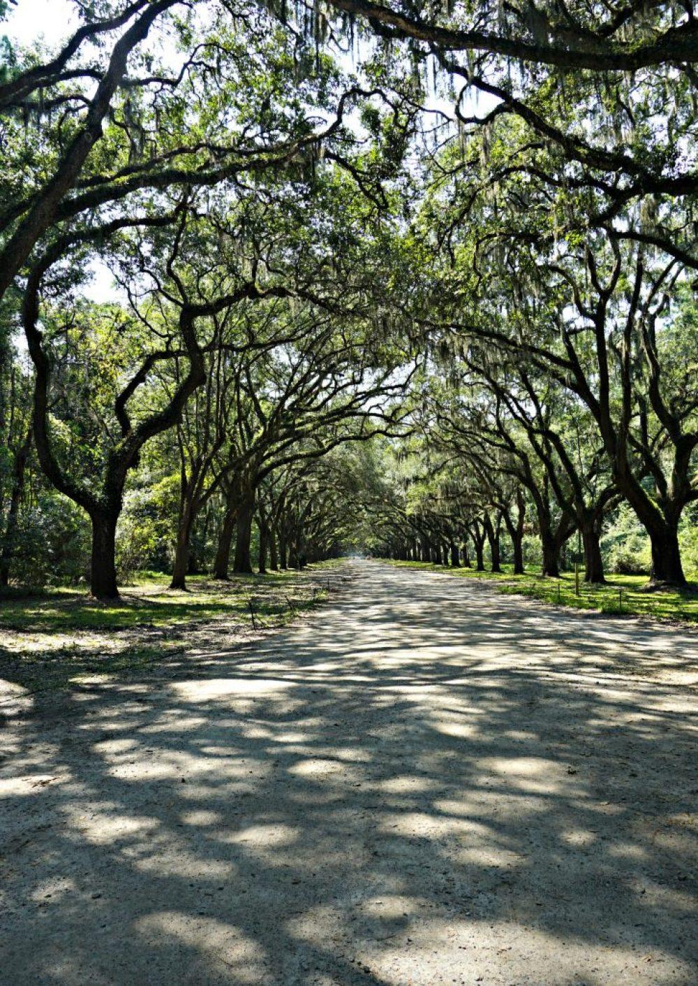 Savannah Through my Lens | thisdarlingworld.com
