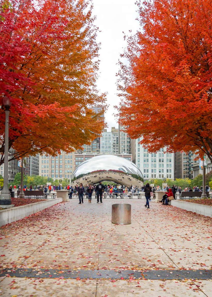 Red autumn leaves and cloud gate chicago