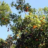 The smell of oranges!