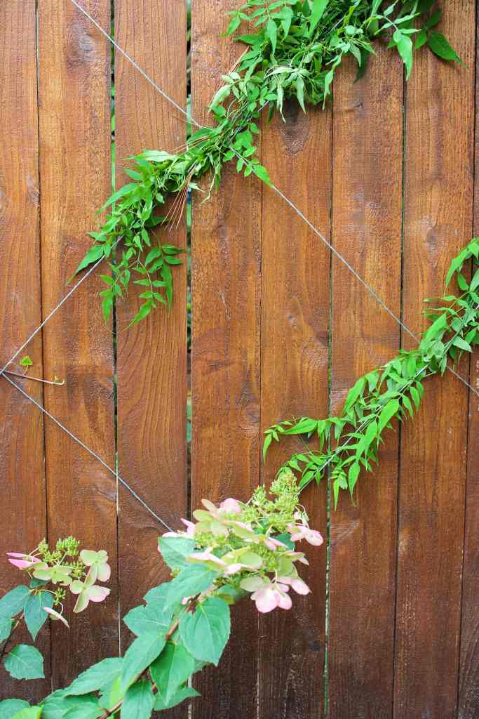 DIY espalier trellis on cedar fence. Vines growing on trellis; hydrangea in foreground.