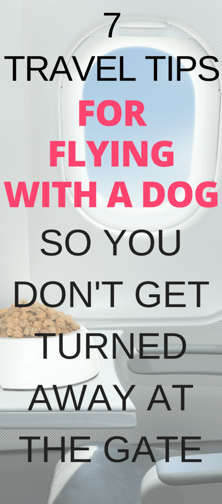 Flying with a dog in cabin can take some additional preparation. Before you book that flight, read these tips on Flying With A Dog to make sure you and your pet are ready for the adventure.