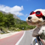 4 Big Mistakes You Need To Avoid When Traveling With Dogs In The Car