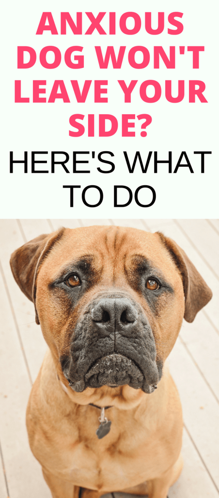 Does your dog suffer from anxiety? Separation anxiety in dogs and fear aggression in dogs can be common. Read this guide to Anxiety In Dogs to find out what it is along with dog anxiety remedies and tips to help calm your pet.