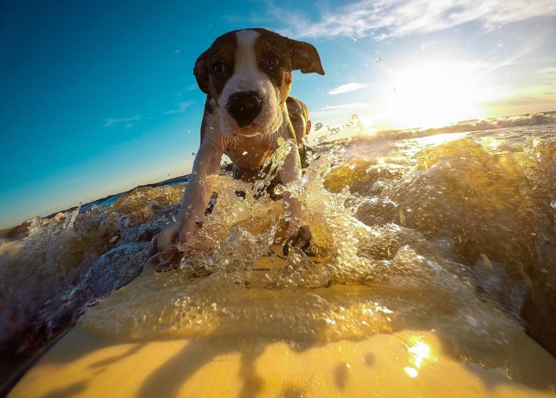 make your dog healthy / keeping dogs happy healthy