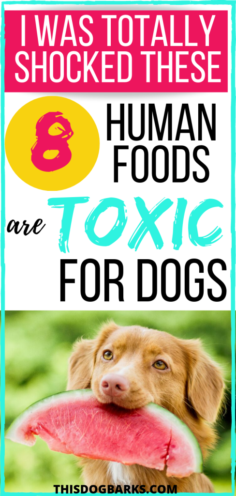 Does your dog love it when you share your food with him? If so, you'll want to be sure you're not unknowingly feeding him any of these seemingly normal human foods that are actually toxic foods for dogs. This list contains 8 poisonous foods for dogs to watch out for. If you're like me, you may be shocked at which foods dogs can't eat!