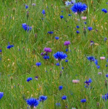 Church: as garden, park, glen and meadow... (5/5)