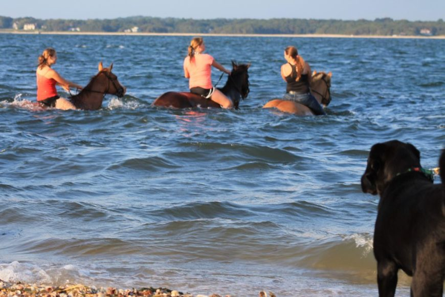 Even horses love the beach! Pony swim