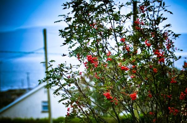 Bloomin' Berries