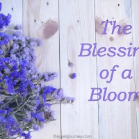 The Blessing of A Bloom