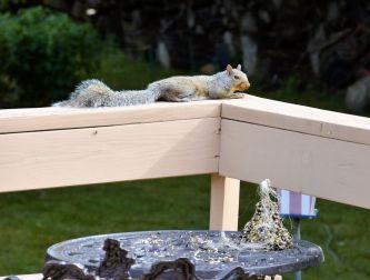 DSC_5470_20140819_squirrel