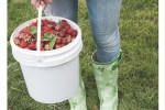 Want to pick your own strawberries in Ireland this summer? Check out the best place to pick your own strawberries in Ireland in Tipperary.