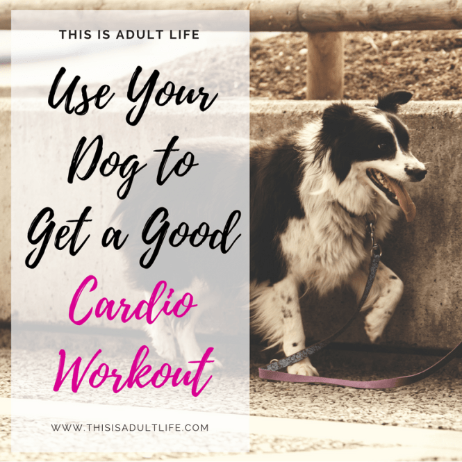 Get a Good Cardio Workout with you Dog