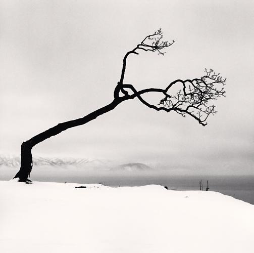 Kussharo Lake Tree, Study 7, Kotan, Hokkaido, Japan, 2007