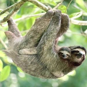 Sloth it up!