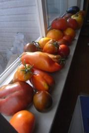 Vine-ripened italian and polish tomatoes | September 2012