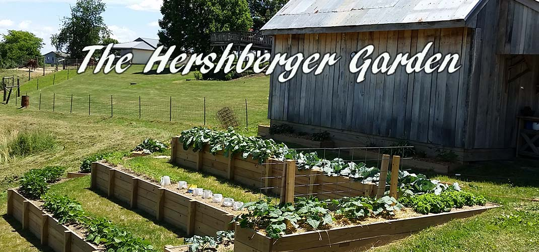 The Hershberger Garden, The Beauty Of Flowers, Food And More! - This ...