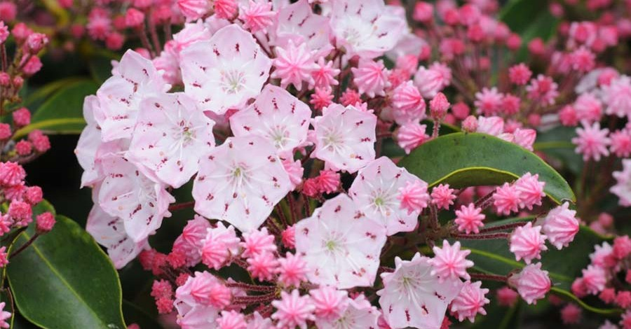 3 Evergreen Shrubs That Give Gorgeous Year Round Color To Your Landscape