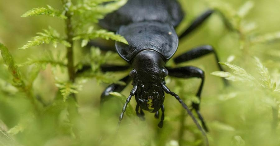 4 Beneficial Insects To Attract And Keep In The Garden
