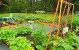 Sandy Greig's New York Country Style Potager Garden