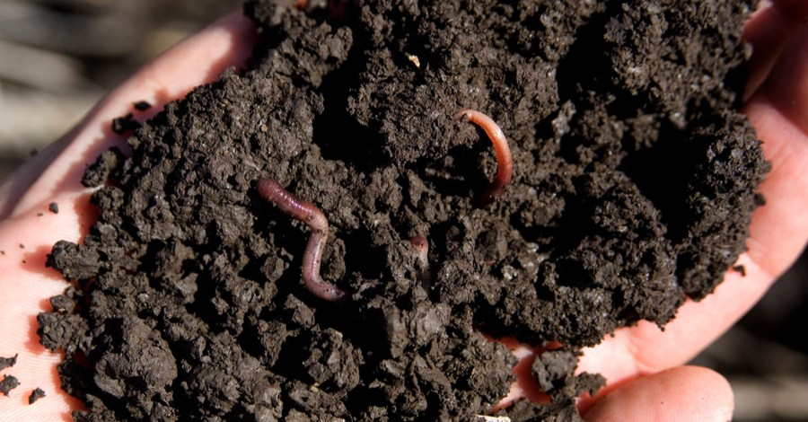 Worm Castings – The Perfect All-Purpose Organic Fertilizer!