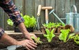 Fertilizing Naturally – 7 Great Ways To Boost Vegetables And Flowers!