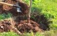 4 Big Keys To Planting Trees Successfully This Fall!