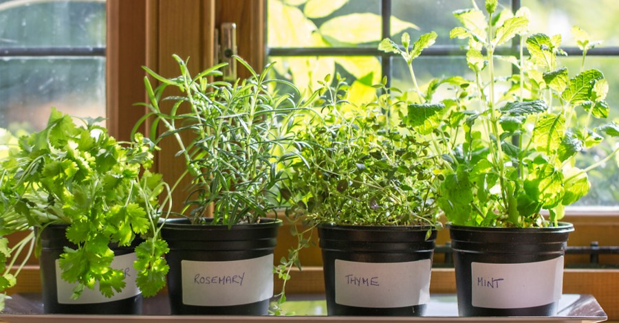 Overwintering Herbs – Bringing Herbs Inside For Winter Use