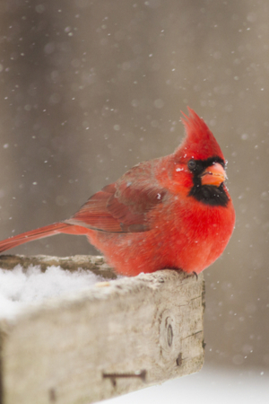 winter bird tips
