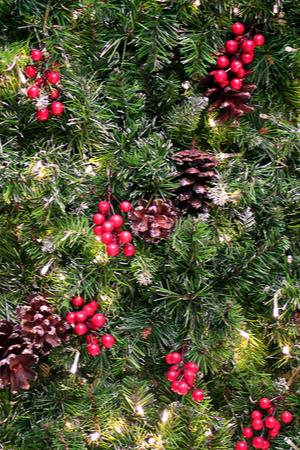 living Christmas tree