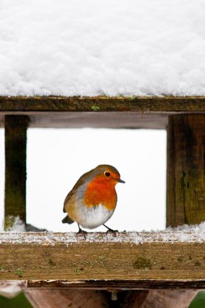 winter bird feeding