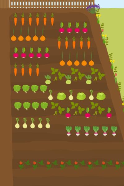 vegetable garden plan