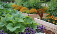 Why Growing Flowers With Vegetables Is The Best Idea Ever!