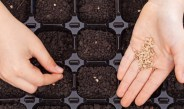 Seed Starting Supplies – The 5 Basic Items You Need For Success!
