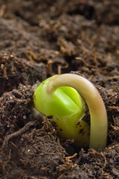 start vegetable seeds