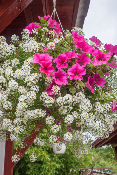 adding big color with hanging baskets