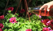 The Best Way To Fertilize Hanging Baskets, Planters & Container Plants