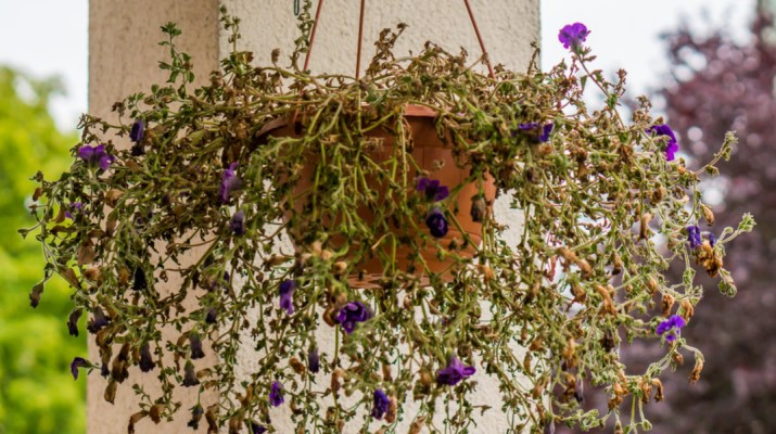 recycle hanging baskets
