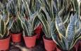 easy grow house plants