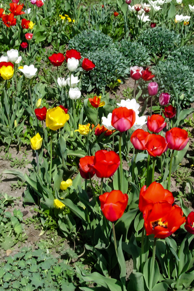 how to eliminate weeds from flowerbeds