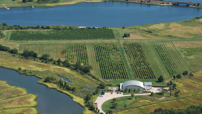 Saltwater Farm Vineyard In Stonington