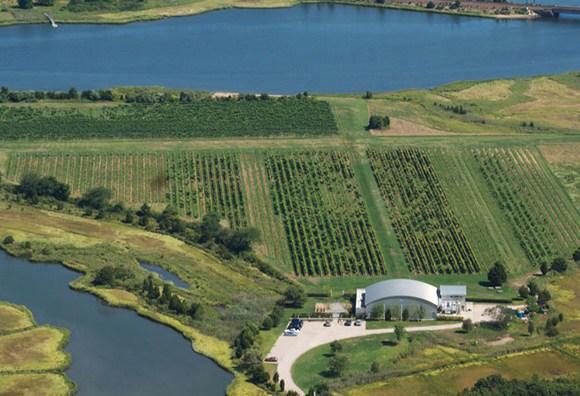 Saltwater Farm Vineyard in Stonington