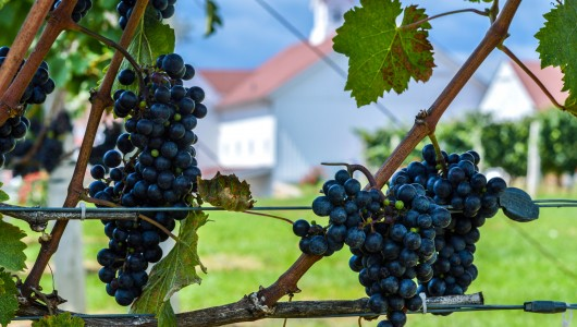 CT Wineries, Vineyards & Breweries