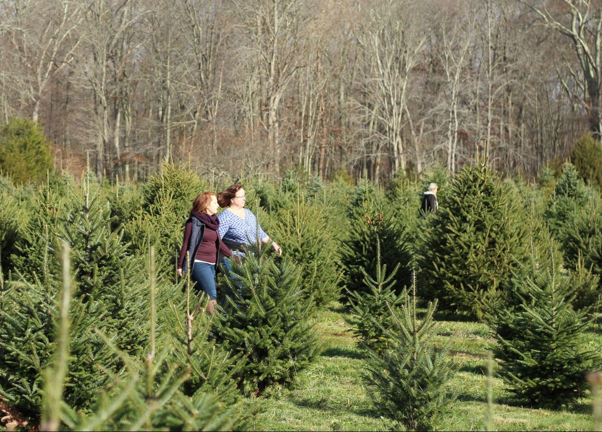 theres something special about picking out a mystic grown tree while supporting a local farming family - Christmas Tree Farming