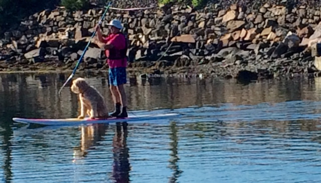 stand up paddle with dog