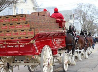 clydesdales-in-mystic3